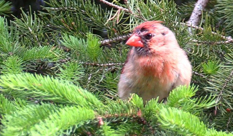 Bird Calls in Nature