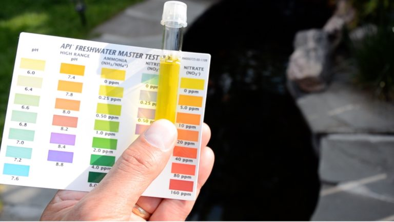 Test the Water Quality in a Koi & Goldfish Pond