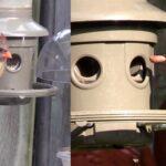 cardinal woodpecker bird sounds