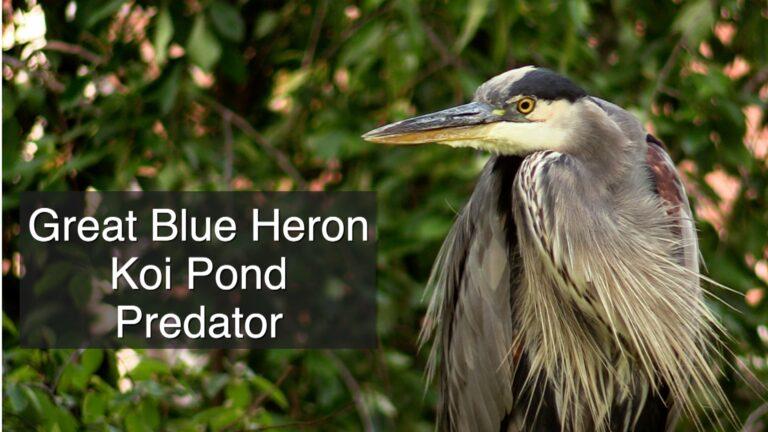 Great Blue Heron image